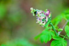 Маленькие зеленые вещи Стоковая Фотография