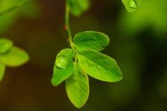 Маленькие зеленые вещи Стоковое Изображение RF