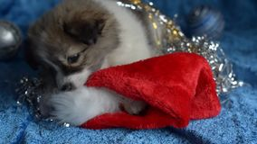 Маленькие игры щенка с украшениями рождества