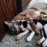Маленькие киски котов спать совместно на земле плюша Стоковые Фото