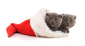 Маленькие котята в шляпе рождества стоковые изображения rf