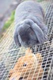 маленькие кролики играя на различных сторонах клетки Стоковое Фото