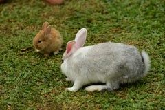 Маленькие кролики каверзны в саде стоковые изображения