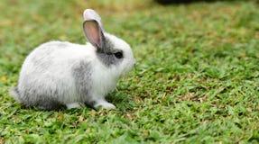 Маленькие кролики каверзны в саде Стоковые Фото