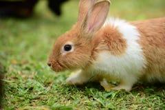 Маленькие кролики каверзны в саде Стоковое фото RF