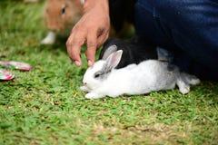 Маленькие кролики каверзны в саде Стоковые Фотографии RF