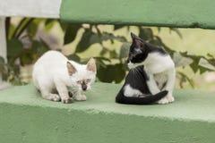 Маленькие любознательные коты вытаращить и играя вокруг красивейшие глаза Стоковая Фотография RF