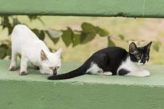 Маленькие любознательные коты вытаращить и играя вокруг красивейшие глаза Стоковое Фото