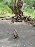 Маленькие обезьяны которые сидящ и ждущ еда стоковые изображения rf