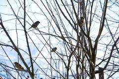 Маленькие птицы на ветвях собаки подняли Стоковые Фото