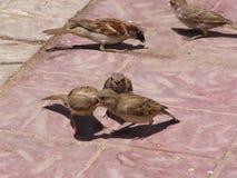Маленькие птицы Стоковое Фото