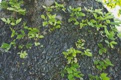 Маленькие ростки растя из ствола дерева стоковые фотографии rf