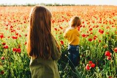 Маленькие рыжеволосые дети выбирают красные цветки в поле стоковые изображения rf