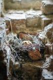 Маленькие цыпленоки в гнезде стоковые фото