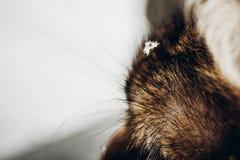 Маленькие snowlakes на конце меха киски вверх Фото от malikhang LS Веселое Chr Стоковое Изображение RF