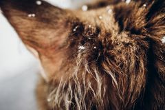 Маленькие snowlakes на конце меха киски вверх Фото от malikhang LS Веселое Chr Стоковые Фотографии RF