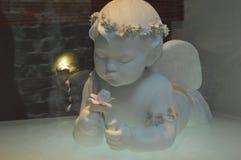 Маленький ангел смотря цветок стоковые фото