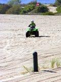 маленький гонщик Сахара стоковое фото rf