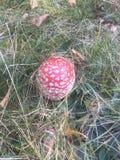 маленький гриб Стоковое Фото