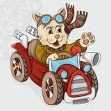 Маленький котенок идет автомобилем Стоковые Изображения RF
