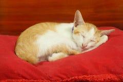 Маленький котенок кота имеет желтый и белый сон меха на красной подушке стоковая фотография rf