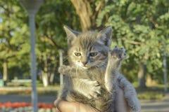Маленький котенок показывает fu kung стоковые изображения rf