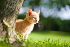 Маленький котенок Стоковое Фото