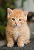 Маленький котенок Стоковая Фотография RF