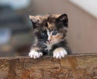 Маленький котенок Стоковое Изображение