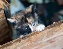 Маленький котенок Стоковые Фото
