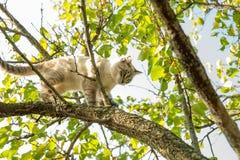 Маленький кот пробует прийти вниз от дерева стоковое фото rf