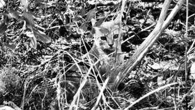 Маленький кот пряча в scrub стоковые фото