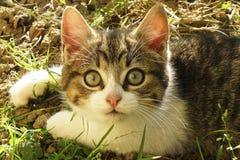 Маленький кот с большими зелеными глазами Стоковые Изображения