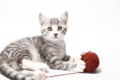 Маленький кот Стоковое Фото
