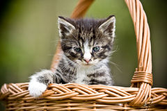 Маленький кот Стоковое Изображение RF