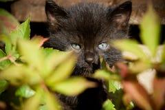 Маленький кот Стоковые Изображения RF