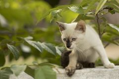 Маленький любознательный кот вытаращить и играя вокруг красивейшие глаза Стоковое Фото