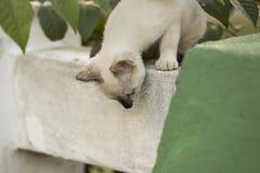 Маленький любознательный кот вытаращить и играя вокруг красивейшие глаза M Стоковые Изображения