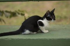 Маленький любознательный кот вытаращить и играя вокруг красивейшие глаза Стоковые Фото