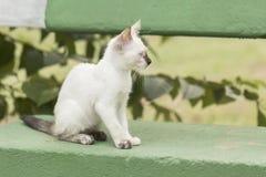 Маленький любознательный кот вытаращить и играя вокруг красивейшие глаза Стоковые Фотографии RF
