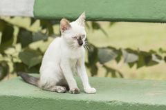Маленький любознательный кот вытаращить и играя вокруг красивейшие глаза Стоковые Изображения RF