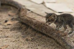 Маленький любознательный кот вытаращить и играя вокруг красивейшие глаза Стоковая Фотография