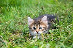 Маленький меховой котенок играя весной луг Стоковые Изображения