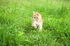 Маленький меховой котенок играя весной луг Стоковые Изображения RF