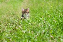 Маленький меховой котенок играя весной луг Стоковое Фото
