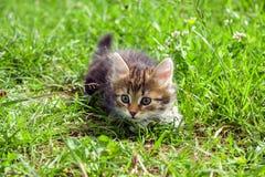 Маленький меховой котенок играя весной луг Стоковая Фотография RF