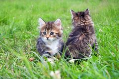 Маленький меховой котенок 2 играя весной луг Стоковая Фотография