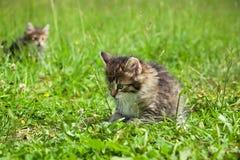 Маленький меховой котенок играя весной луг Стоковая Фотография