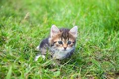 Маленький меховой котенок играя весной луг Стоковое Изображение RF