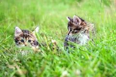 Маленький меховой котенок 2 играя весной луг Стоковое Изображение